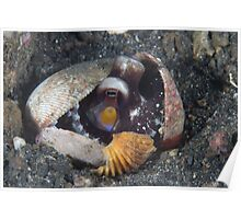 Coconut Octopus in Shell Poster