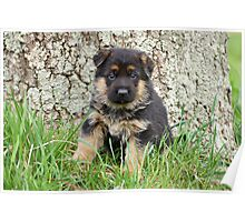 Pup Sitting by Tree Poster