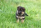 Happy Puppy by Sandy Keeton