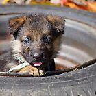 Puppy in Tire by Sandy Keeton