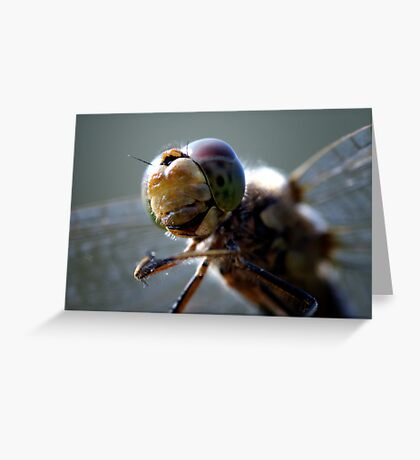 Dragonfly. Greeting Card