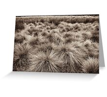 grasslands landscape Greeting Card