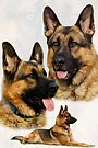 German Shepherd Collage by Sandy Keeton
