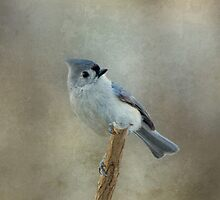 Tufted Titmouse by Sandy Keeton