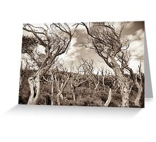 wilsons promontory trees 2 Greeting Card