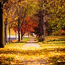 Autumn Arrives On My Block by Thomas Young