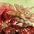 Christmas Bunnies by roxygen