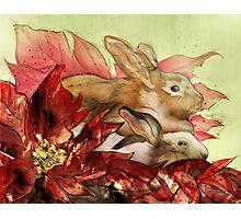 Christmas Bunnies Photographic Print