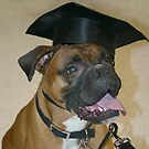 Boxer Dog School Graduate by SpiceTree