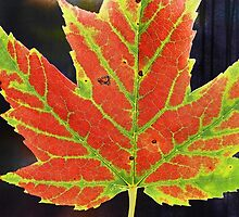 Colorful Leaf Veins by Kathilee
