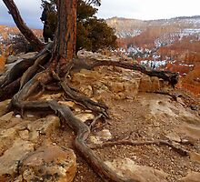 Roots and Rocks by Snail-Trail