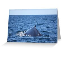 Humpback Whale Greeting Card