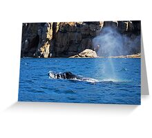 Humpback Whale Spout  Greeting Card