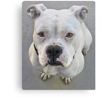 Brienne - 1 year old female spayed pit bull Canvas Print