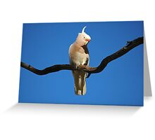 Curious Cocky Greeting Card