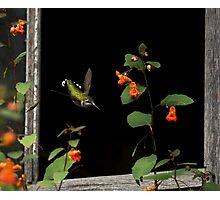 Through the barn window Photographic Print
