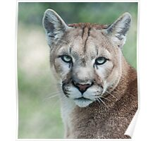 Cougar Poster