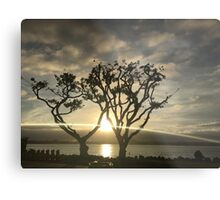 Corel Trees Metal Print