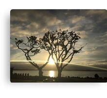 Corel Trees Canvas Print
