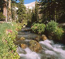 Mitchell Creek by Eric Glaser