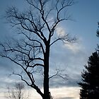 Tree Silhouette  by DreamCatcher/ Kyrah Barbette L Hale