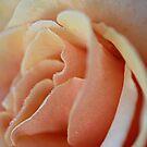 Petals II by KirstyStewart