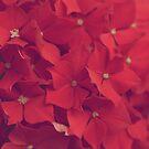 Pink by KirstyStewart