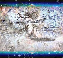 Dragonfly Among the Stars by Dawna Morton