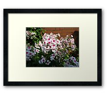 Sunlit Pink and White Blossoms Framed Print