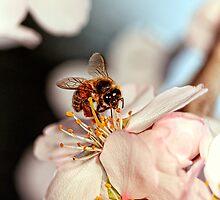 """Bee-utiful"" by Paul Amyes"