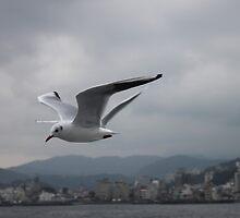 In Flight by elm321