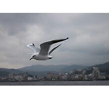In Flight Photographic Print