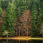 Autumn forest around lake Génin by Patrick Morand