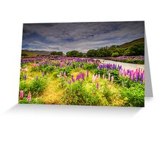 The Lupins in Lindis Pass Greeting Card