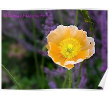 Yellow Flower! Poster