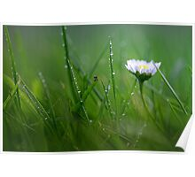 Daisy in the wet grass... Poster