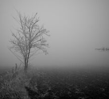 Fog with tree in a gray field by maiemy
