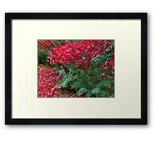 Blackhills Autumn Plants in bloom. Framed Print