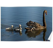 Swan Sanctuary Poster