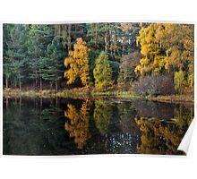 Blackhills , Autumn Trees Mirrored Poster