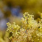 Bush Gold by Penny Kittel