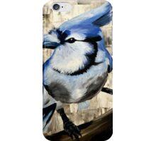 Blue Jay by KK iPhone Case/Skin