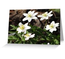 Five pretty, white flowers Greeting Card