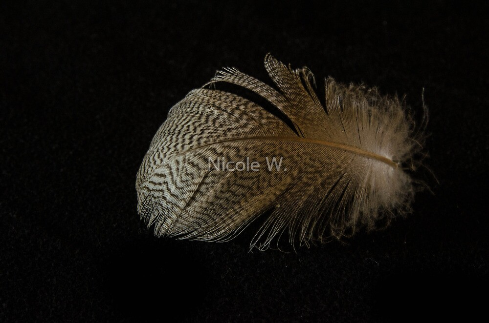 Fun with a feather II by Nicole W.