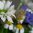 Summer bouquet by Heather Thorsen
