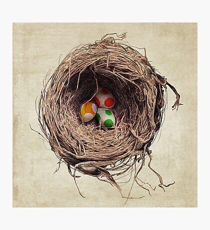 Yoshi Eggs Photographic Print