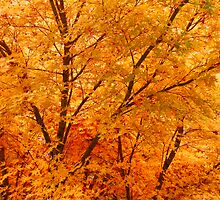Leaves Of Fall HDR by James Brotherton
