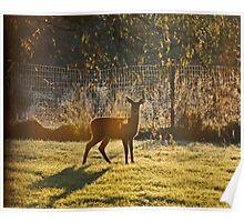 Autumn Morning Deer Poster