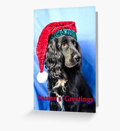 Season's greetings dog Greeting Card