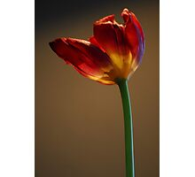 Welcome Spring II Photographic Print